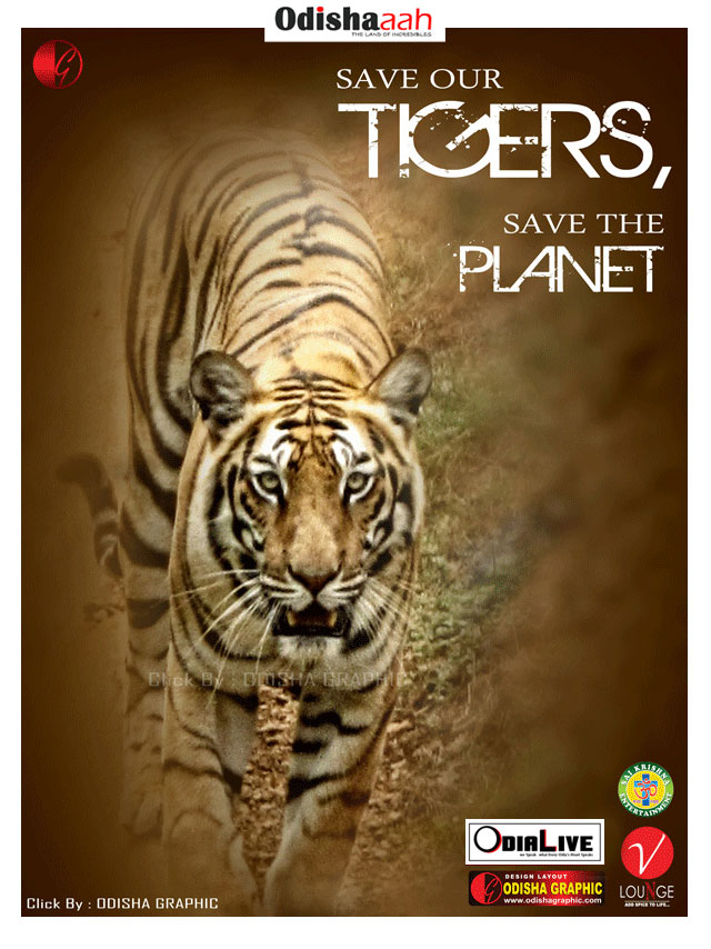 Indian-tigers