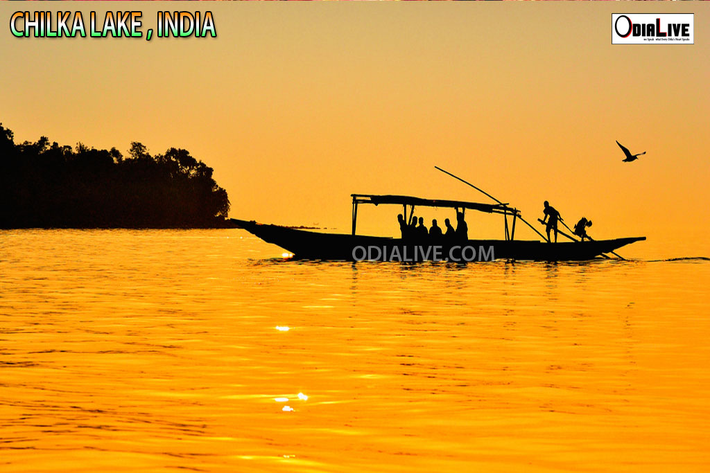 chilka-lake-odisha