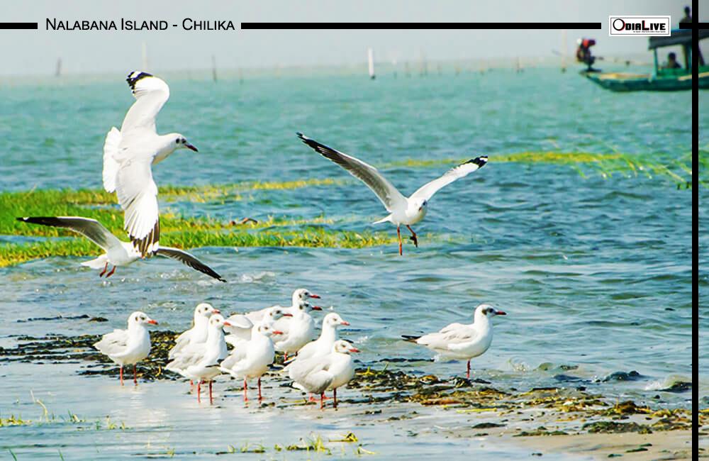 tourist-place-odisha