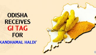Odisha receives GI tag for 'Kandhamal Haldi'